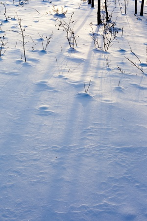 Soft Shadows of plants and trees on powder snow surface. photo