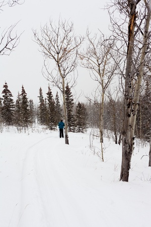 Cross-country skiing person active outdoors while snow falls.