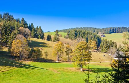 Farmland, farm houses and forested hills in Black Forest, rural Germany. photo
