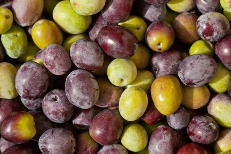 Background texture pattern of freshly harvested green and black (red) olives close-up. Stock Photo - 9167721
