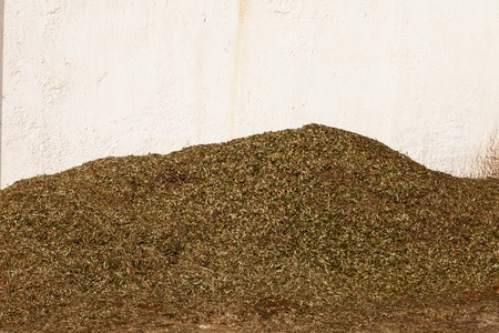 factory: Pile of olive leaves separated from the olives before being milled for olive oil. Stock Photo