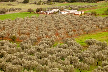Typical small farm in Greece (Peloponnes), Europe, mainly depending on olive orchards. photo