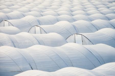 Muster des endlosen Meer aus Kunststoff Gartenbau Gew�chshaus Tunnel f�r intensive Anbau von Gem�se.
