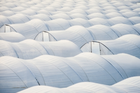 greenhouse effect: Pattern of endless sea of plastic horticulture greenhouse tunnels for intensive farming of vegetables.