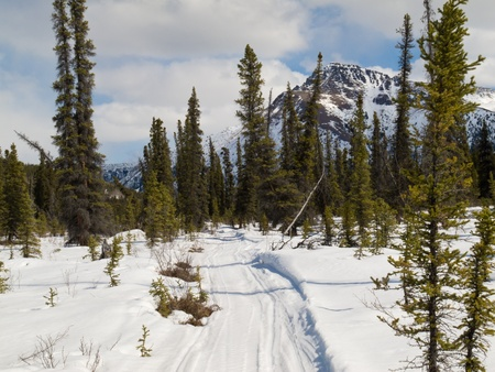 snowmobile: Well used winter trail in boreal forest (taiga) of Yukon Territory, Canada. Stock Photo