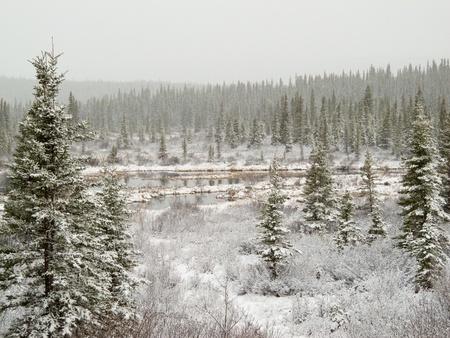 snow falling: Neve che cade sul terreno paludoso laghetto e foresta boreale (taiga) del territorio dello Yukon, Canada.