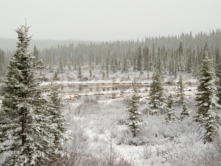 Snow falling on marshland pond and boreal forest (taiga) of Yukon Territory, Canada.