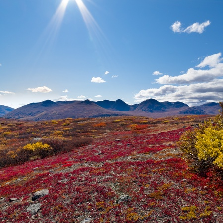 Fall-colored alpine tundra landscape in the Yukon Territory, Canada.