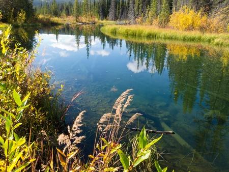 Sky reflection on calm clear taiga wetland pond in yellow of fall, Yukon Territory, Canada.