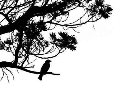 Black and white artwork silhouette of singing Common Blackbird, Turdus merula, perched on the branch of a tree Stock Photo