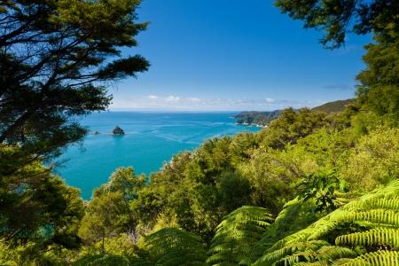 Lush sub-tropical forest vegetation of Abel Tasman National Park, South Island, New Zealand 版權商用圖片
