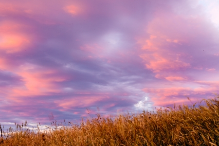 diffused: Soft diffused colourful sunset background in shades of pink, purple and lilac in a cloudy sky over dry yellow grassland meadow pasture