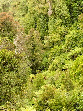 subtropical: Overhead view of lush green vegetation in a sub-tropical rainforest in New Zealand Stock Photo