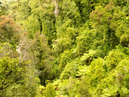 tropical native fern: Overhead view of lush green vegetation in a sub-tropical rainforest in New Zealand Stock Photo