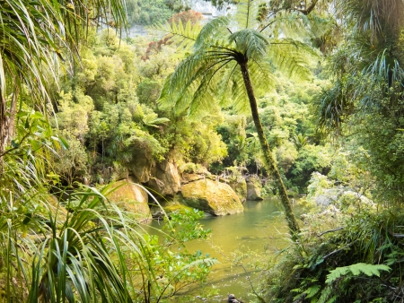 Lush green vegetation in sub-tropical rainforest along Pororai River, West Coast, South Island, New Zealand