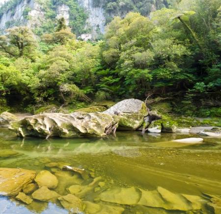 subtropical: Lush green vegetation in sub-tropical rainforest along Pororai River, West Coast, South Island, New Zealand