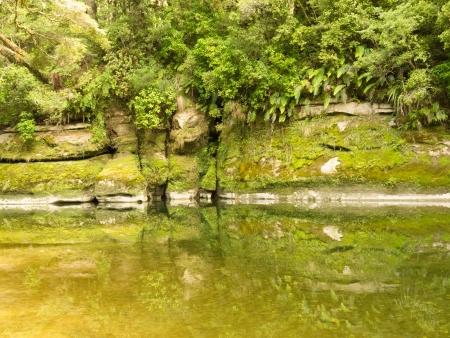 Lush green vegetation in sub-tropical rainforest along Pororai River, West Coast, South Island, New Zealand