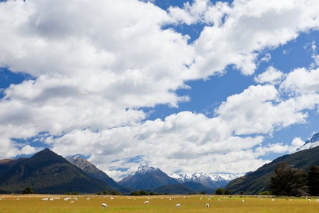 Grazing sheep in glacial Rees Dart river valley with Mt Aspiring National Park, Southern Alps, vista backdrop forming an iconic New Zealand landscape photo