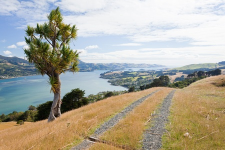 Otago peninsula coastal landscape scenery with cabbage tree in foreground, South Island near Dunedin, New Zealand photo