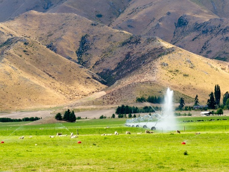 Turning a dry mountain valley into lush green farm pastures by irrigation with a long mobile sprinkler system while livestock graze peacefully nearby photo