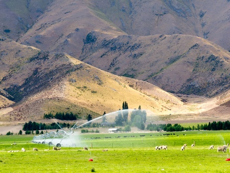 Turning a dry mountain valley into lush green farm pastures by irrigation with a long mobile sprinkler system while livestock graze peacefully nearby