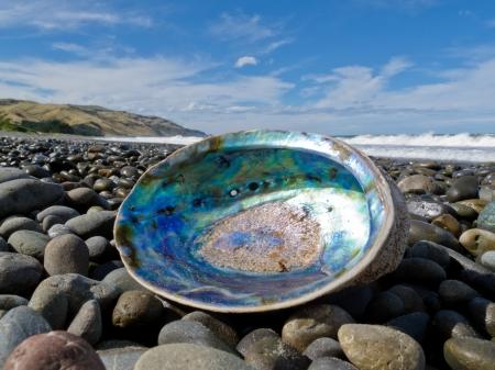 浜空パウアや Perlemoen アワビのシェルを陸上の砂利のビーチに横たわっている虹色の真珠マザーオブ パール内部を示す