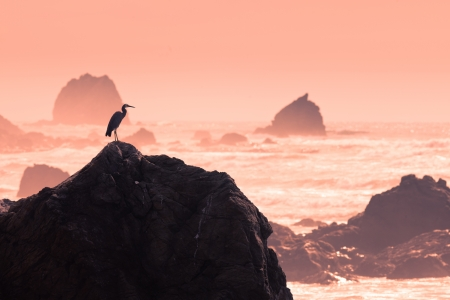 Sunset at stormy coast with silhouette of heron patiently observing the scene for a chance to fish