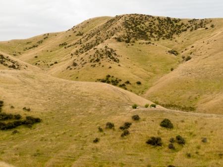 sequias: Las colinas ondulantes cubiertas de pasto seco, de color amarillo ovejas pastizales en la Isla Sur, Nueva Zelanda Foto de archivo