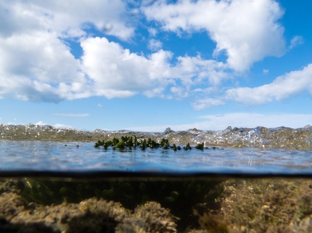 Half underwater half over, over-under split shot of clear turbulent sea water in tidal pool with underwater seaweed growth