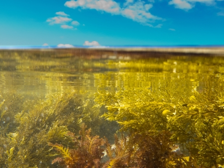 Half underwater half over, over-under split shot of seaweed growth in tidal pool against blue sky with some clouds overwater photo