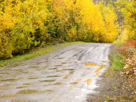 Rainy autumn day on South Canol Road, Yukon Territory, Canada, lined with beautiful yellow willow wilderness bush Archivio Fotografico