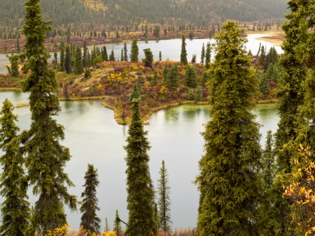 boreal: Rainy autumn weather at lake surrounded by beautiful colorful boreal forest wilderness of Yukon Territory, Canada