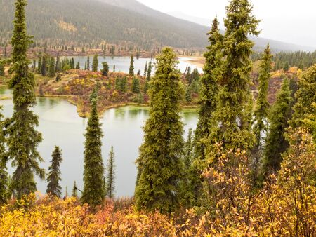 yukon: Rainy autumn weather at lake surrounded by beautiful colorful boreal forest wilderness of Yukon Territory, Canada