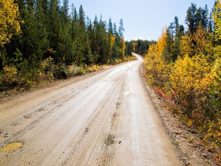 boreal: Rainy autumn day on South Canol Road, Yukon Territory, Canada, lined with beautiful yellow willow bushes in boreal spruce forest
