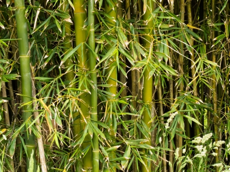 Background texture pattern of fresh green bamboo plants