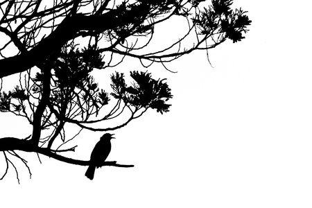Black and white artwork silhouette of singing Common Blackbird, Turdus merula, perched on the branch of a tree Фото со стока