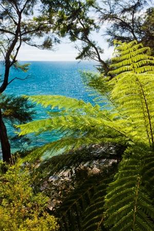 subtropical: Lush sub-tropical forest vegetation of Abel Tasman National Park, South Island, New Zealand Stock Photo