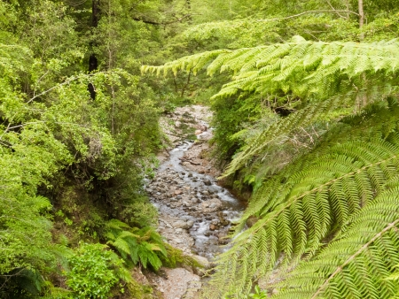 Forest creek making its way through dense vegetation of lush rainforest jungle of the West Coast of New Zealand South Island Stock Photo - 14087146
