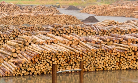sawmill: Stockpiled cut and trimmed tree trunks in an industrial timberyard to be processed in a sawmill into lumber