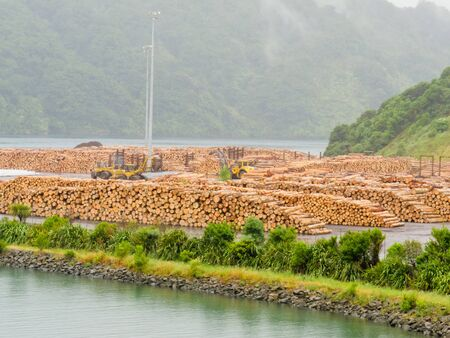 oversea: Stockpiled cut and trimmed tree trunks in an industrial timberyard to be shipped for export oversea Stock Photo
