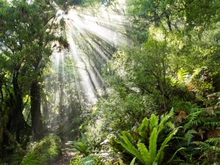 tree canopy: Sun beams of light penetrating dense lush green canopy of tropical rainforest jungle wilderness Stock Photo