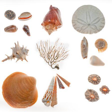 sand dollar: Encontrado en el paseo de la playa: una gran variedad de conchas, arena, d�lares el esqueleto del coral