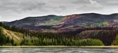 boreal: Recently burnt boreal forest in the Yukon River valley, Yukon Territory, Canada. Stock Photo