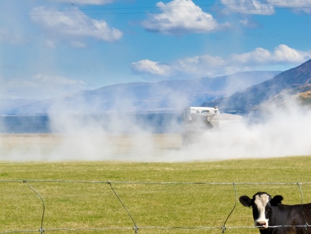 phosphate: Cow watching truck spreading fertilizer on pasture meadow creating an enormous white dust cloud of rock phosphate and potash