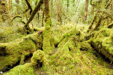 Virgin rainforest wilderness of Fiordland National Park, South Island, New Zealand photo