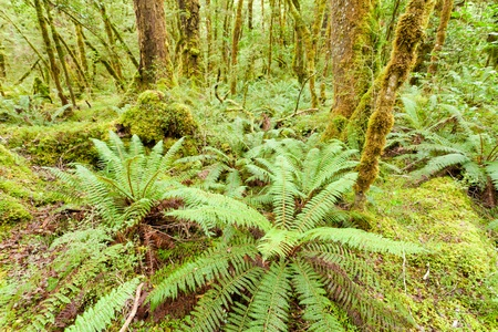 fiordland: Virgin rainforest wilderness of Fiordland National Park, South Island, New Zealand Stock Photo
