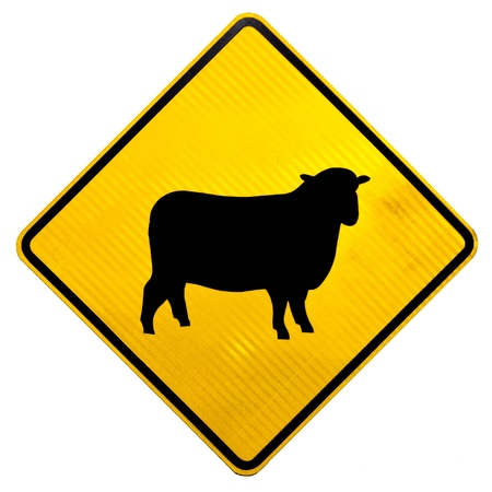 New Zealand Road Sign, Attention Sheep Crossing Road isolated on white background