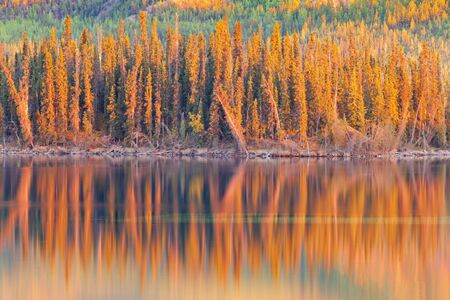 Warm sunset light reflections on calm surface of boreal forest wilderness pond, Twin Lakes, Yukon Territory, Canada photo