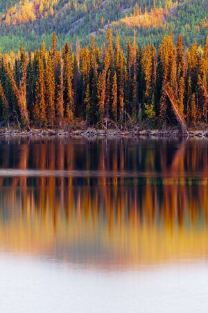 yukon territory: Warm sunset light reflections on calm surface of boreal forest wilderness pond, Twin Lakes, Yukon Territory, Canada