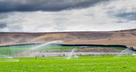 ranching: Turning a dry mountain valley into lush green farm pastures by irrigation with a long mobile sprinkler system while livestock graze peacefully nearby